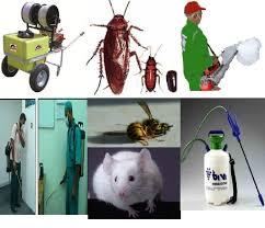 شركة رش مبيدات بالبقيق المنطقة بساط الريحية